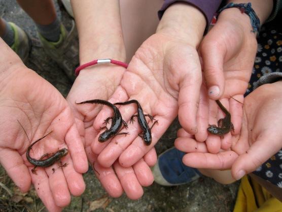 Pasen '15: salamanders vangen