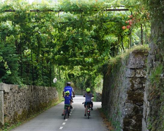 fietsen onder de wijnranken